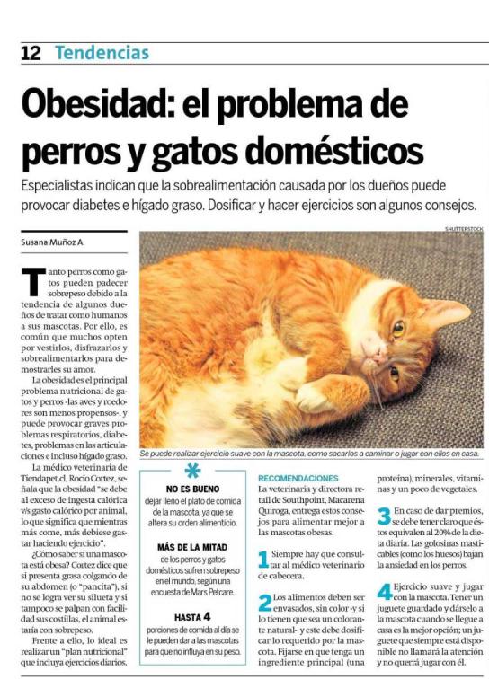 28-junio-18-obesidad-en-gatos-
