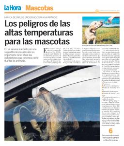 los-peligros-de-las-altas-temperaturas-para-mascotas